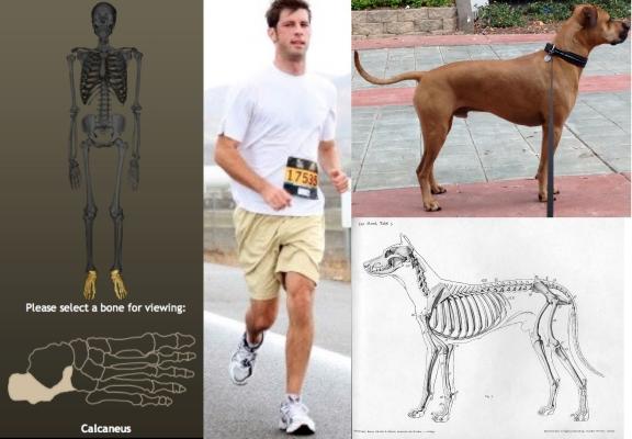 running-dog-erick